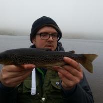 1/2 lb Wild Brown trout
